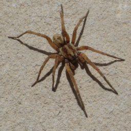 Уничтожение пауков в Белокурихе